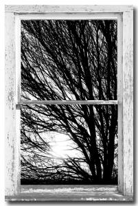 Tree Branches and Light White Farm House Picture Window Portrait